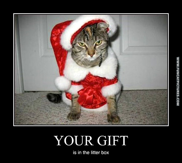 Cat santa isn't very nice | Fun Cat Pictures