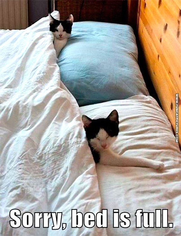 Two cats fill a bed