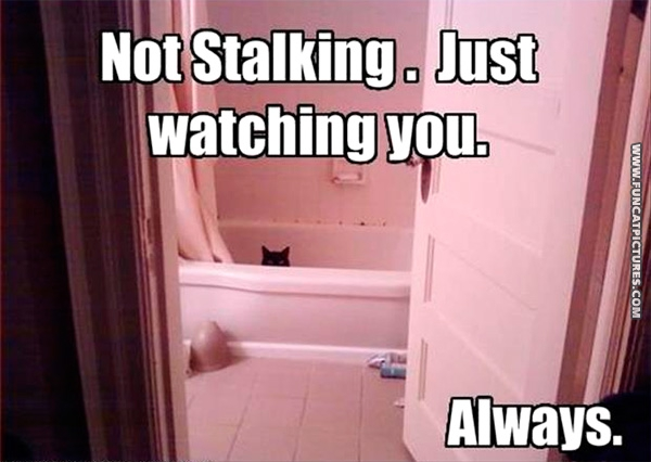 The cat is always watching you