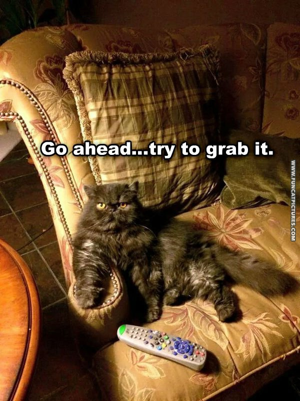 Is this cat protecting the couch or the remote?