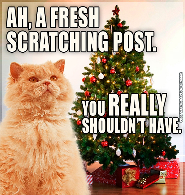 Christmas | Fun Cat Pictures