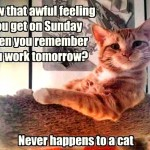 Cats are not bothered by sundays