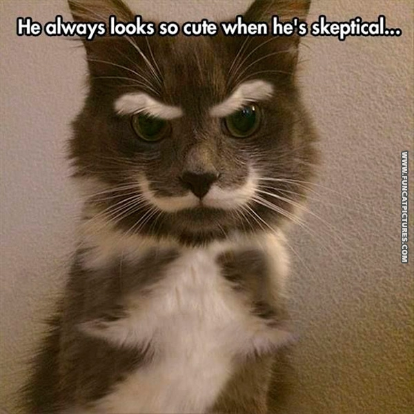 The world's most sceptical cat