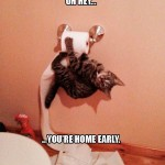 What cat owners comes home to