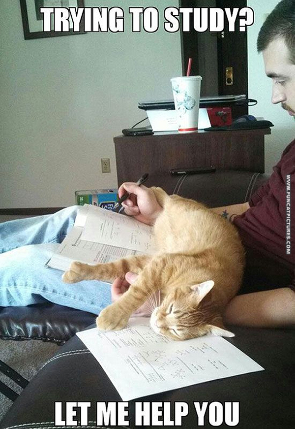 Cats are the best study companions