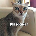 When a cat hears a can opener