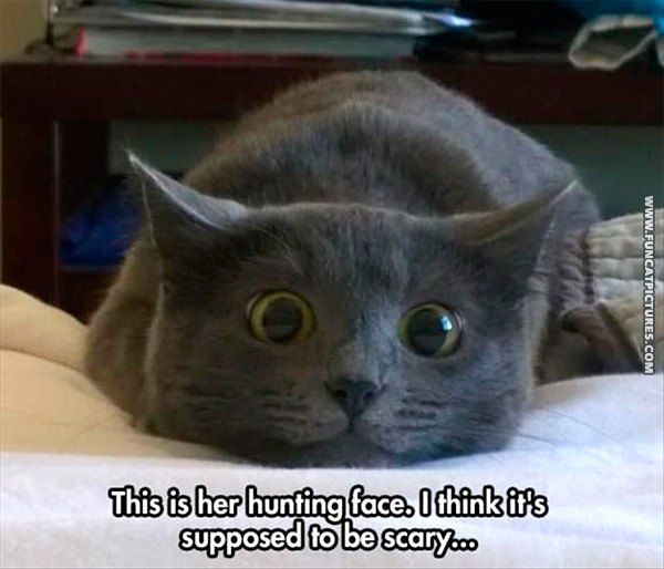 funny-cat-pictures-hunting-face