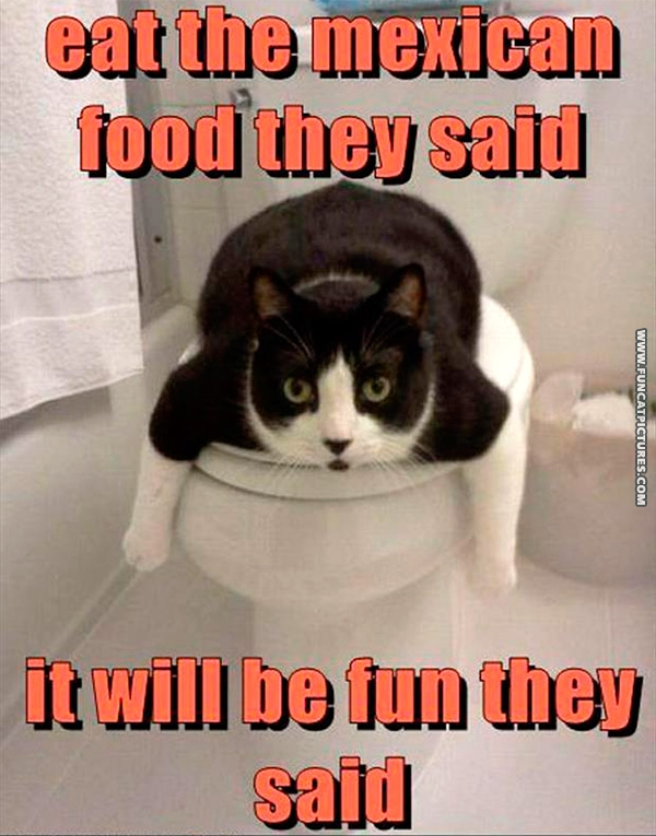 Taco Bell Archives | Fun Cat Pictures Funny Pictures