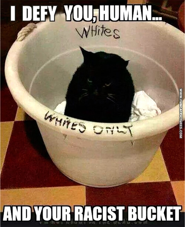 Cats are against all forms of discrimination