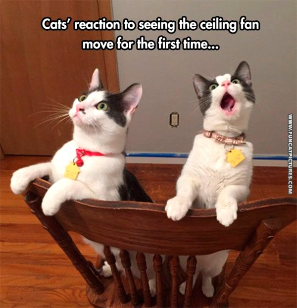 Priceless cat reactions