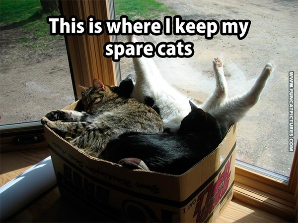 fun-cat-pictures-spare-cats