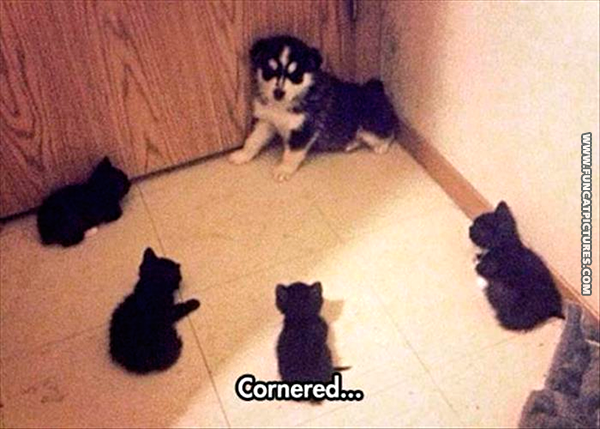 funny-cat-pictures-cornered-dog