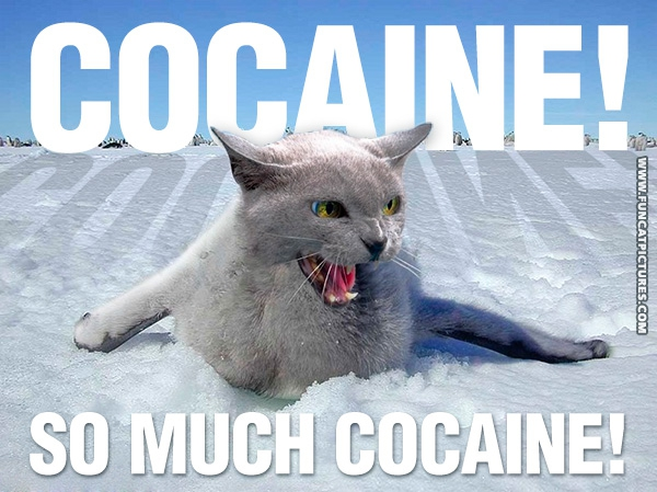 funny-cat-pictures-cocaine-snow-new