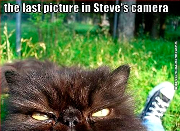 The last cat Steve ever saw