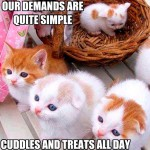 What these kittens demands, they will get