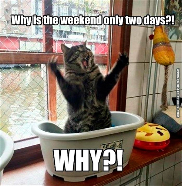 Even cats enjoys weekends