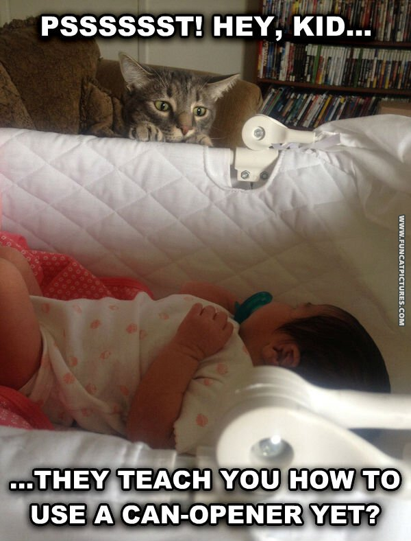Why cats and babies get along so well