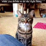 Cats never beg, and here's why
