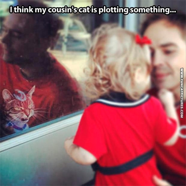 There's something strange about children and cats…