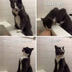 A cat does what he can to help