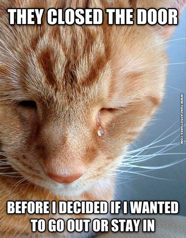 funny-cat-pictures-cat-problems