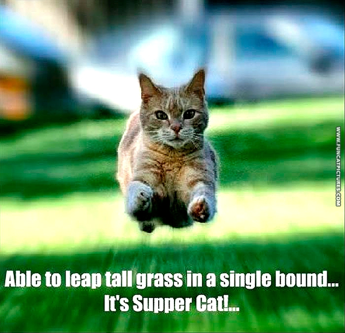 Food brings out a hero in every cat
