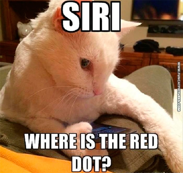 How the cat finally found the red dot