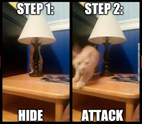 Two steps of a cat hunt
