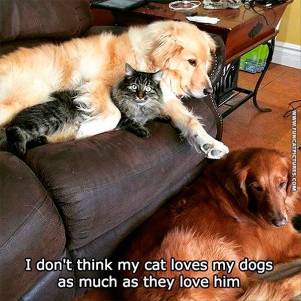 Not every cat is a dog lover