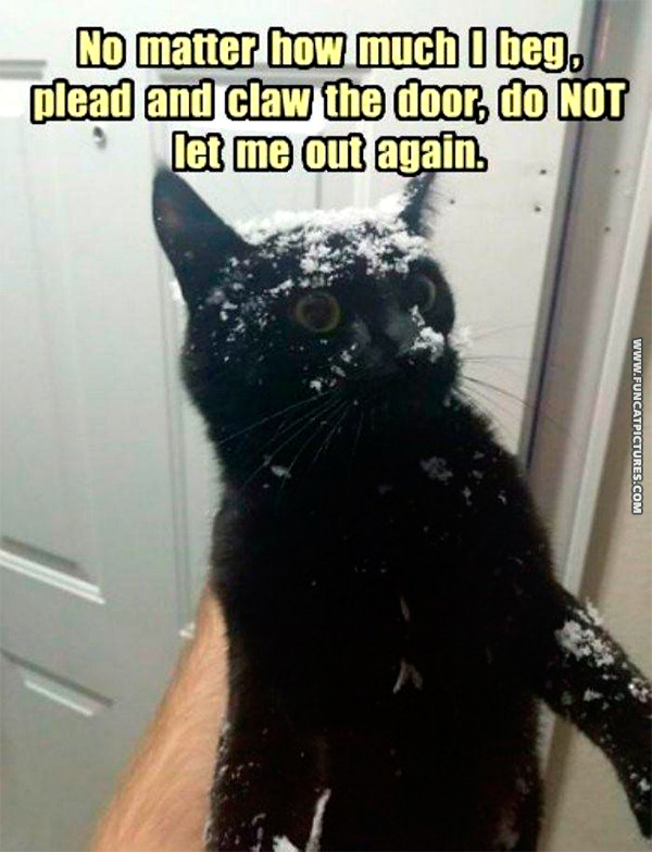 funny-cat-pictures-doesnt-like-snow