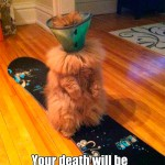 I'll bet that this cat will have the last laugh