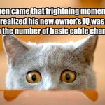 The exact moment when the cat realized…