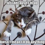 Some cats are so lazy…