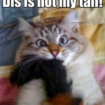 That awkward moment for a cat