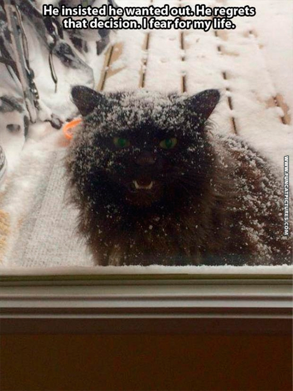 Never trust a cat that wants to go outside when it snows