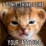 This cat's got an attitude about your attitude
