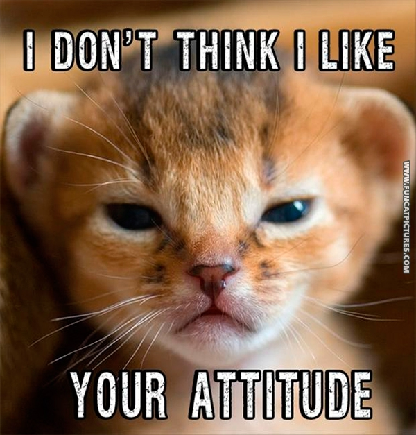 funny-cat-pictures-your-attitude