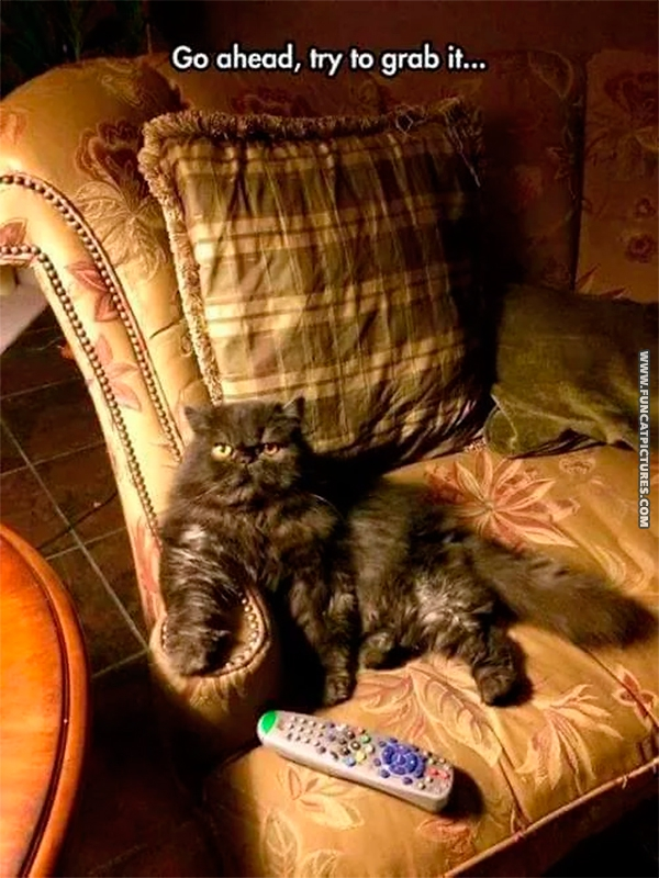 When the cat got the remote…