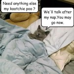 This cat's got what he needs
