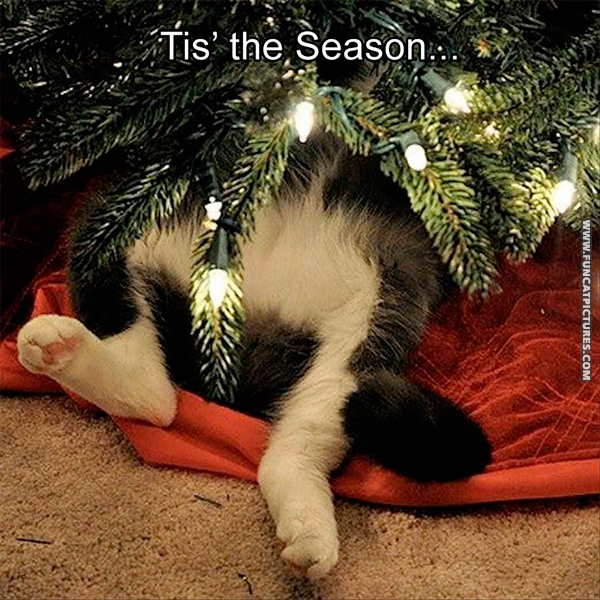 Cat hiding in a christmas tree