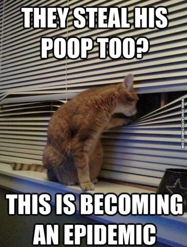funny cat pictures poop stealing