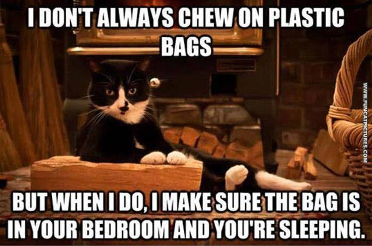funny cat pictures sitting cat doesnt always chew on bags