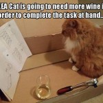 IKEA furniture is not for sober cats