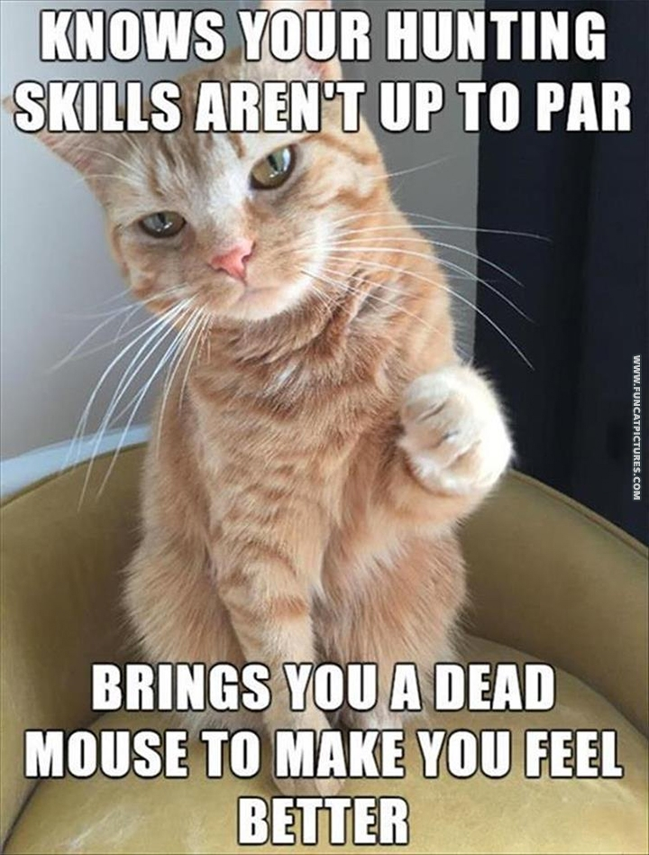 Good guy cat brings you a dead mouse