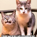 This cats look kinda says it all