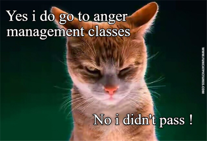 Angry cat - Yes, i do anger management classese