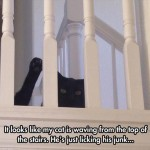 When you think your cat is waving…