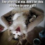 Beware of catnip
