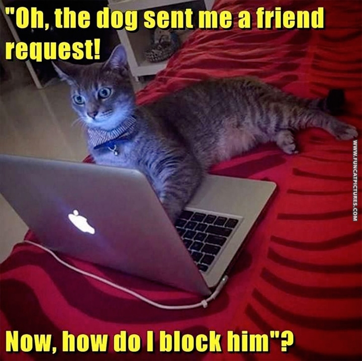 Cat with laptop - The dog sent me a friend request