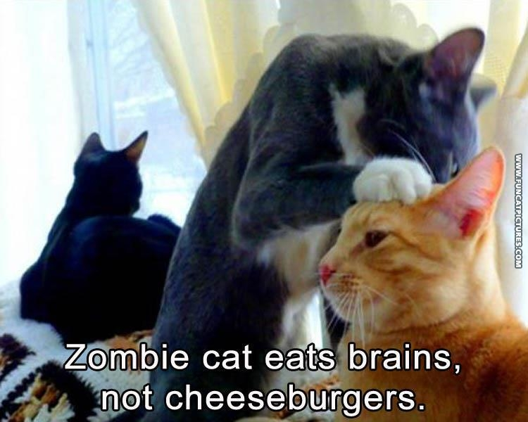 Zombie cat doesn't want cheezburgers